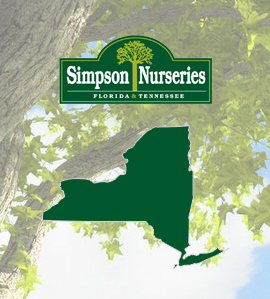 Simpson Nurseries 100 Years And Still Growing